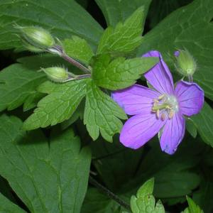 Keystone Flora Native Plants