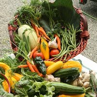 Abundantly Green Certified Organic Produce
